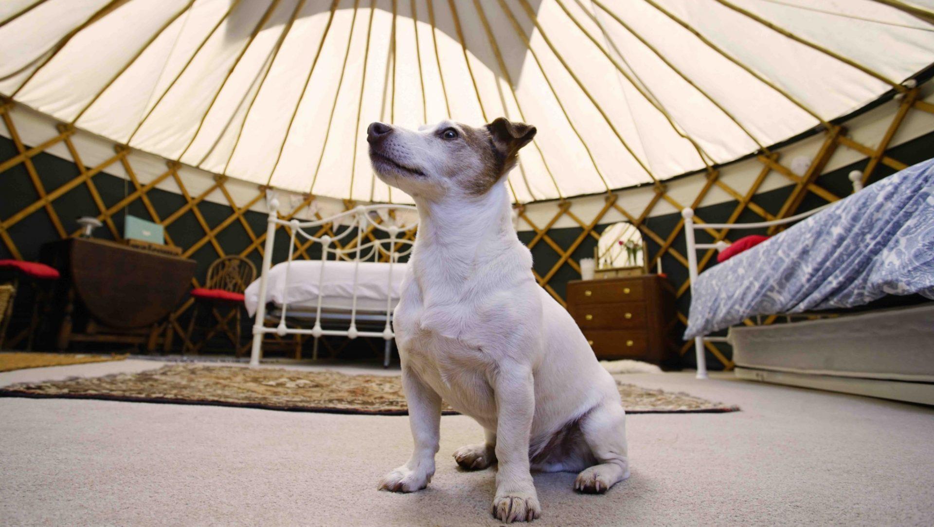 Summer, fun & Moon Dog | The Orchard Retreat
